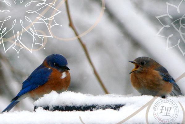 bluebird-duo