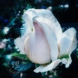 lsd-rose